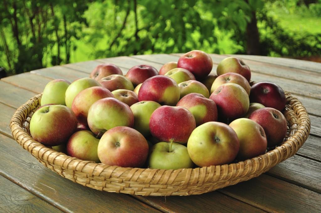 eine Schüssel voll Äpfel