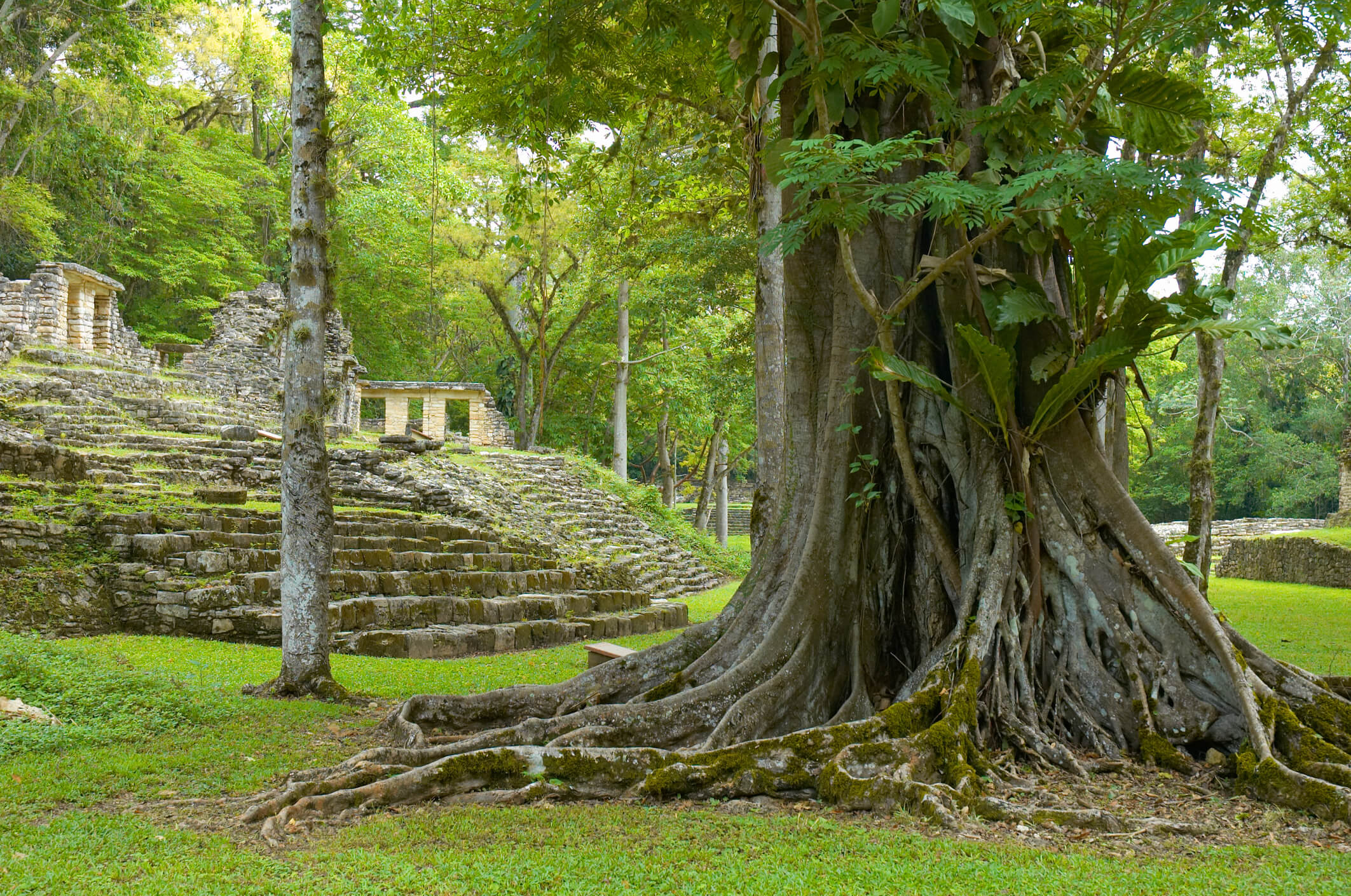 Yaxchilan: Der Baum des Herzens