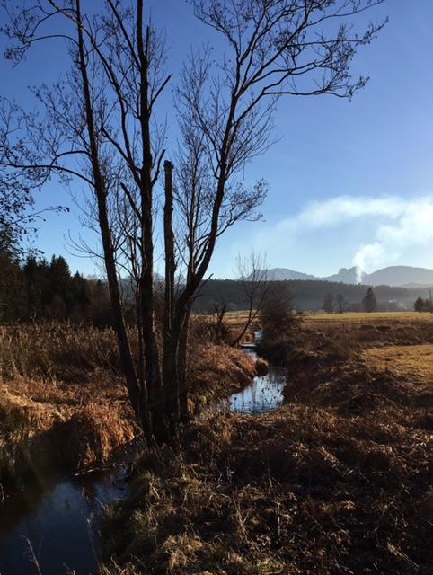 Winterbaeume vor mooriger Felder und einem Fluss