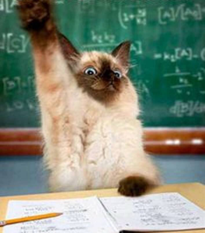 Die 28 Tage Herausforderung angenommen: eine Katze meldet sich
