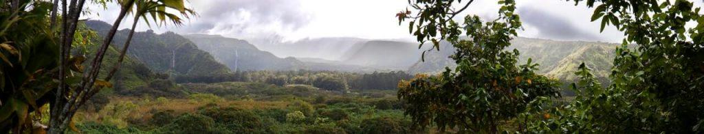 Regenwald, Nebelwald, Dschungel