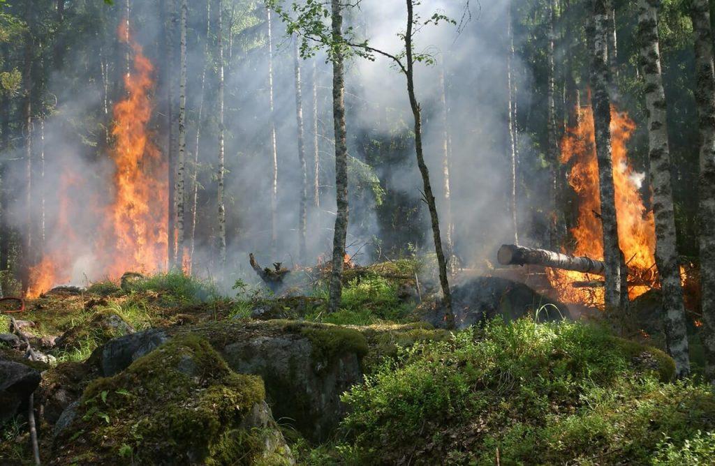 Feuer Rodung im Wald